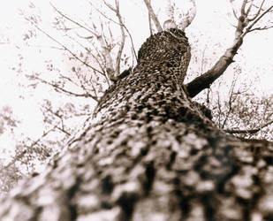 tree by mapishita