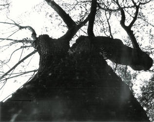 tree.2 by mapishita