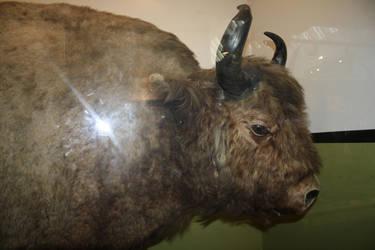 Bull Thingy by AyumiCoza
