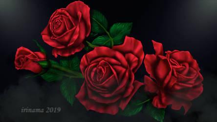 Red roses by irinama