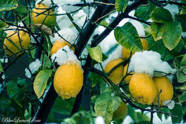 Ice Lemonade by BlueLunarRose