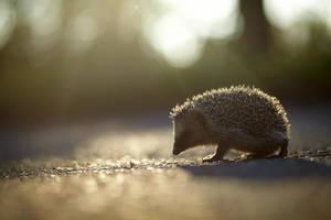 hedgehog 2 by lucoctober