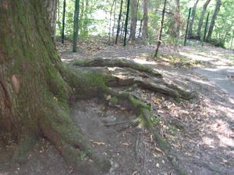 Tree Roots by mikyzachibiakuma
