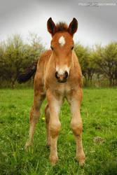 Horse no.4 by Paulaart18
