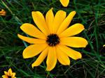 A Little Bit Of Fall Sunshine by Calypso1977