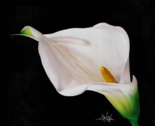 Lily Calla by STiX2000