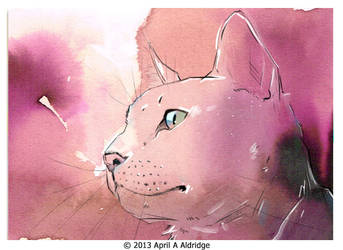 ACEO White Cat by April-A