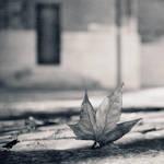automne by 2jL