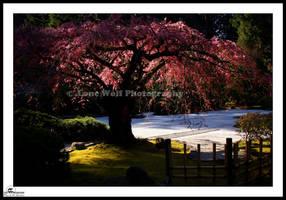 Burning Bush by LoneWolfPhotography