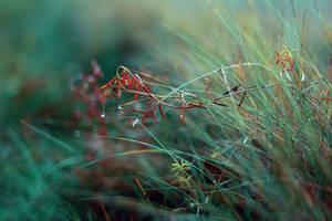morning-fog-grass by LauraZalenga