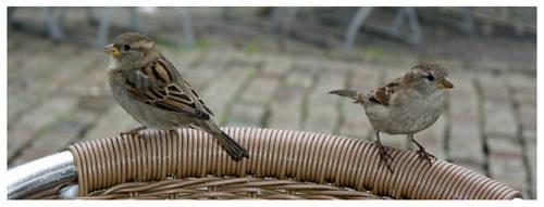 Mandal Birds by fukasink