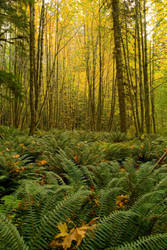 ferns and maple by depleted