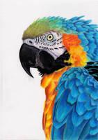 Macaw by blue-birdie-drawings