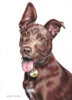 Dog portrait by blue-birdie-drawings