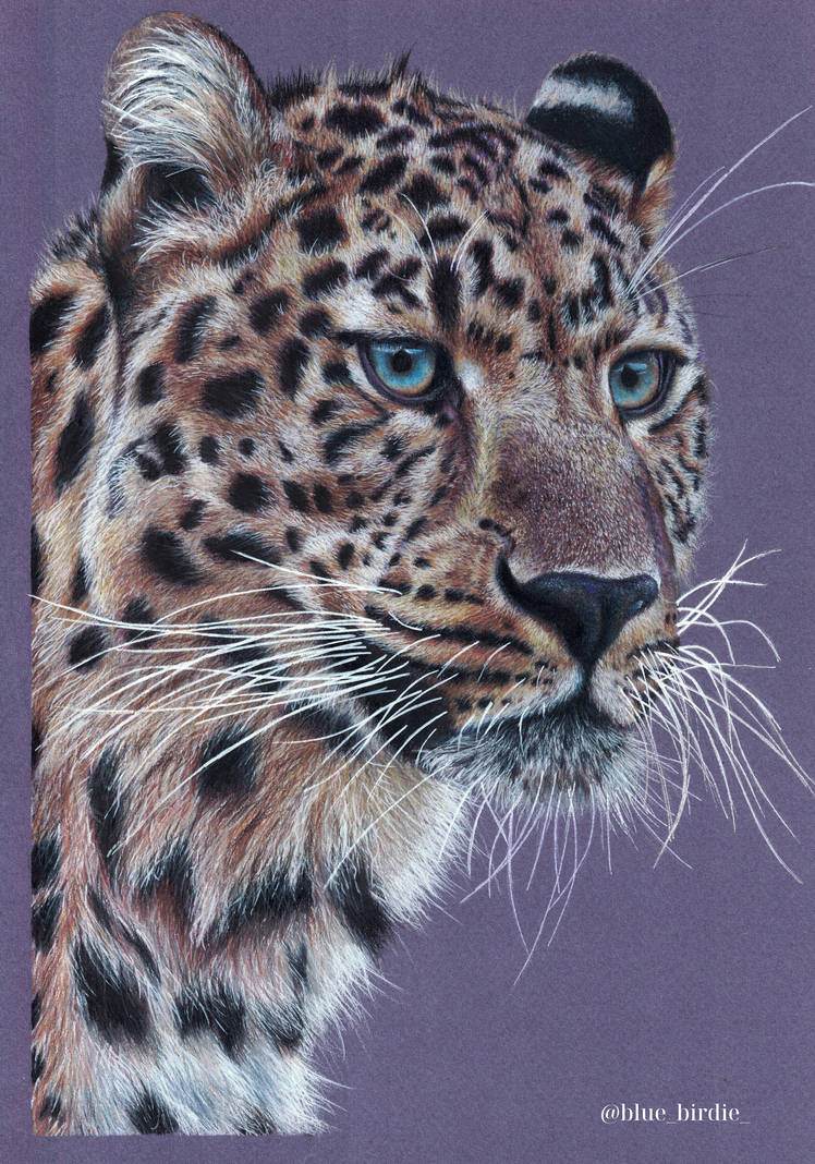 Jaguar by blue-birdie-drawings