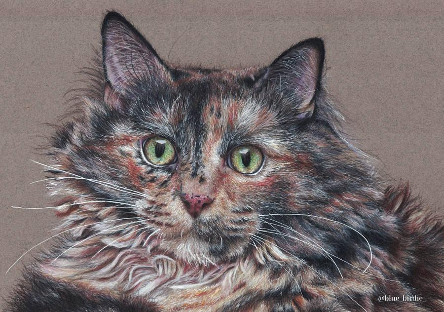 Cat portrait by blue-birdie-drawings