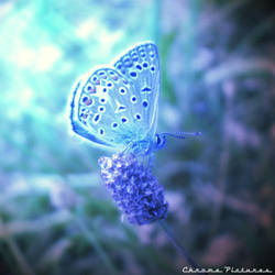 Lil' blue Butterfly by AljoschaThielen