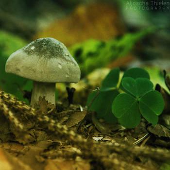 An Almost Lucky Mushroom by AljoschaThielen