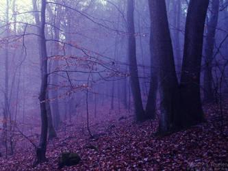 Dream Woods by AljoschaThielen