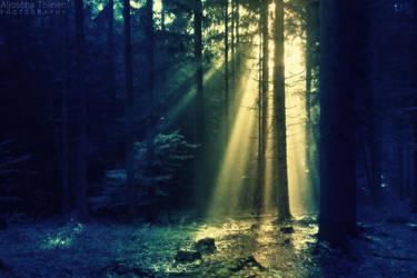 Morning Spotlight by AljoschaThielen