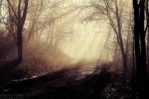 Into the Fog by AljoschaThielen