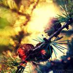 Glisten in the sun by AljoschaThielen