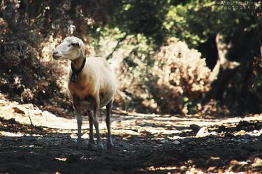 Sheep by AljoschaThielen