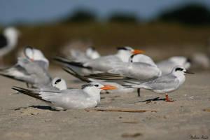 Terns by mydigitalmind