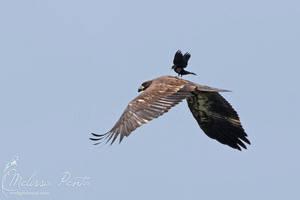 Riding the Eagle by mydigitalmind