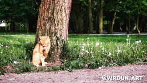 Ginger Cat by Vanites