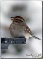Tea-Bird by sunflowervlg