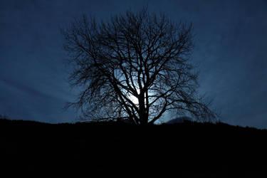 Moonlit Aspen by janernn