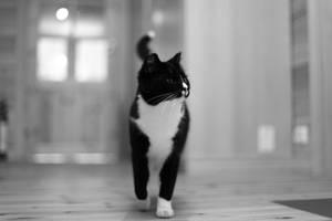 Catwalk by janernn