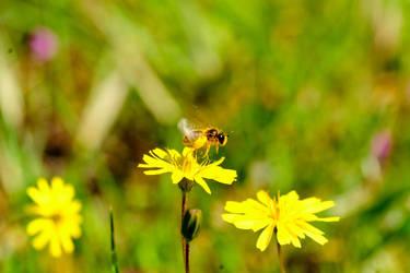 Bee Being by CenkDuzyol