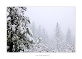 Sierra National Forest by CenkDuzyol