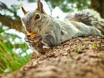 Look....a squirrel by Photography-Onlooker