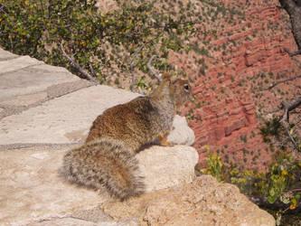 Squirrel by allison731