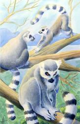 Lemurs by AnnickHuber