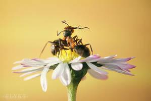 Ants In Love by MissFlykt