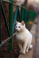 White Cat by Bagirushka