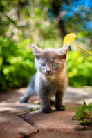 Little Kitty in The Big World by Bagirushka