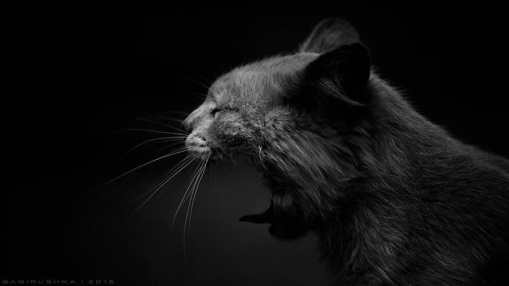 Fear of the Dark by Bagirushka