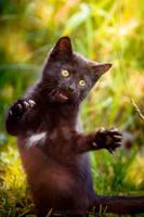Black Kitten by Bagirushka