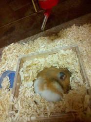 My sweetie is sleepin' by LittleMafiaPrincess