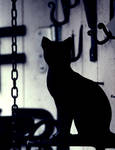 Cat in Stockholm by Luca-De-Bellis