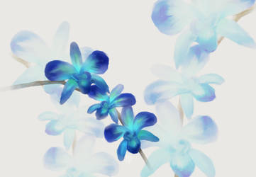 Blue Orchid Speedpaint by FreakorGeek