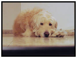 my dog 2 by blackest-eye