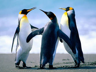 Penguins by EdwardCullenFanGirll