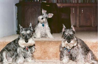 Dog Generations by EdwardCullenFanGirll