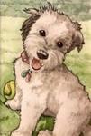 Dodger Aceo Pet Portrait by art-paperfox